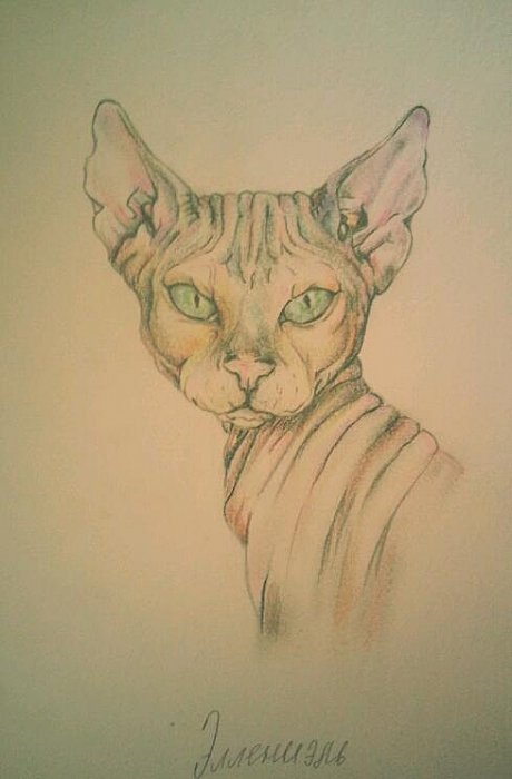 Кошика