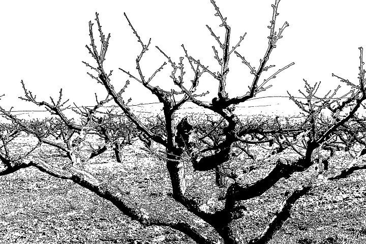 Dancing Peach Trees 4 ~ andrewdyachkin