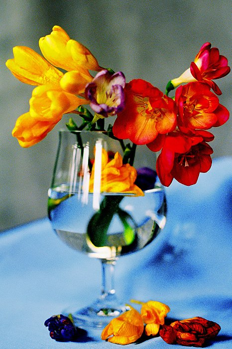 Freesia and petals ~ andrewdyachkin