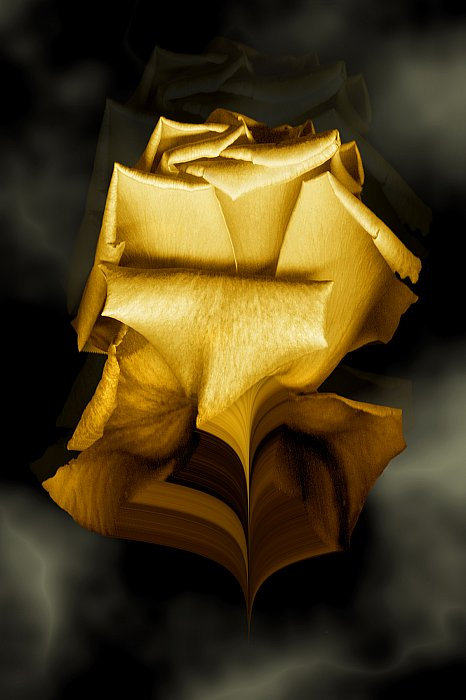 Golden Rose ~ andrewdyachkin