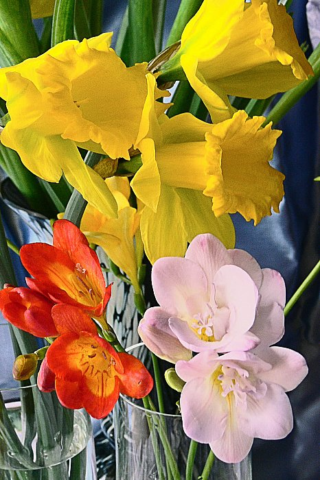 Narcissuses and freesia 1 ~ andrewdyachkin