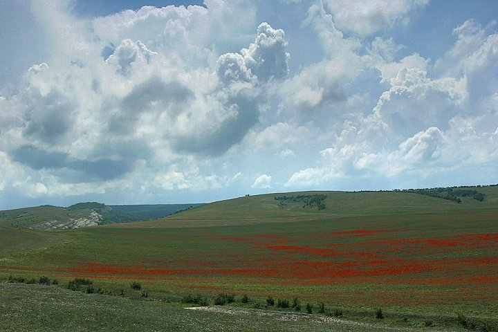 Poppies and Clouds ~ andrewdyachkin