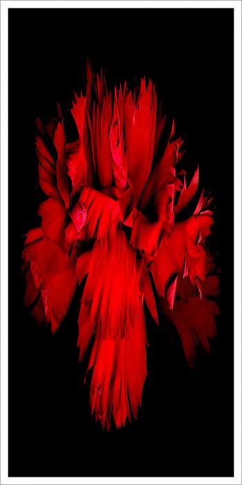 Red clove extended ~ andrewdyachkin