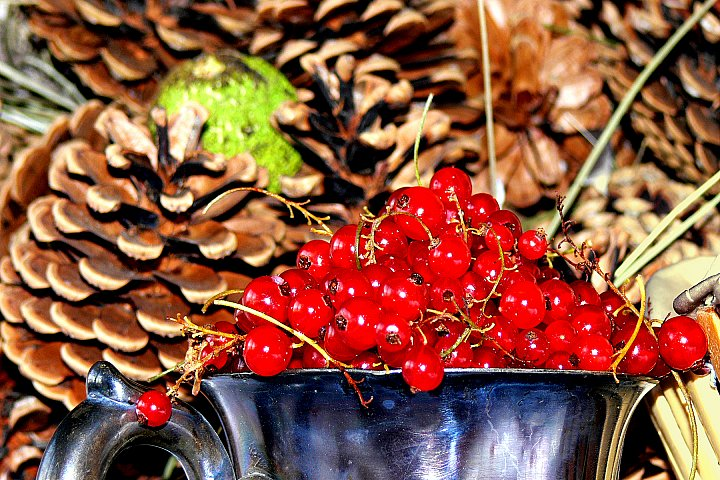 Red Currant ~ andrewdyachkin
