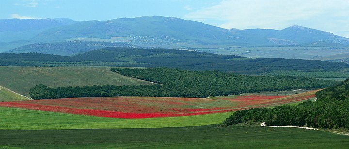 Red Fields ~ andrewdyachkin