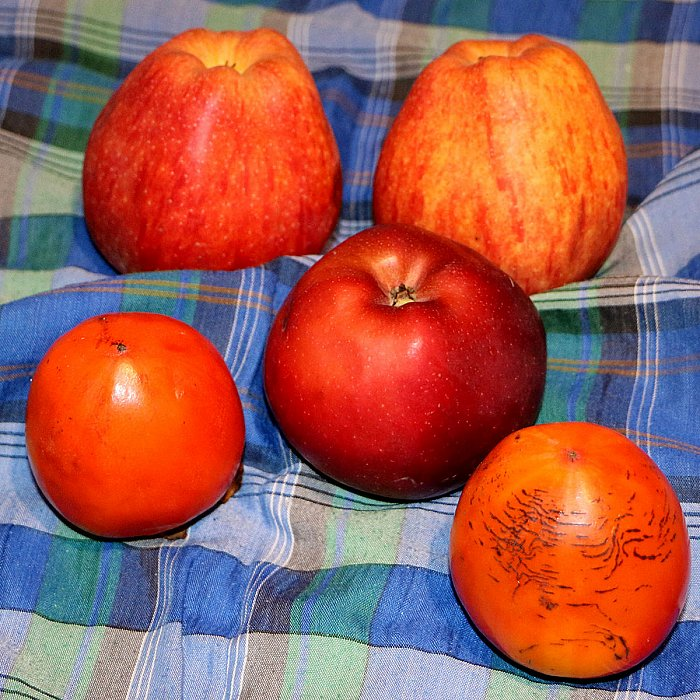 Still lifes with persimmon 5 ~ andrewdyachkin