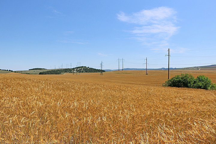 Wheat and wires ~ andrewdyachkin