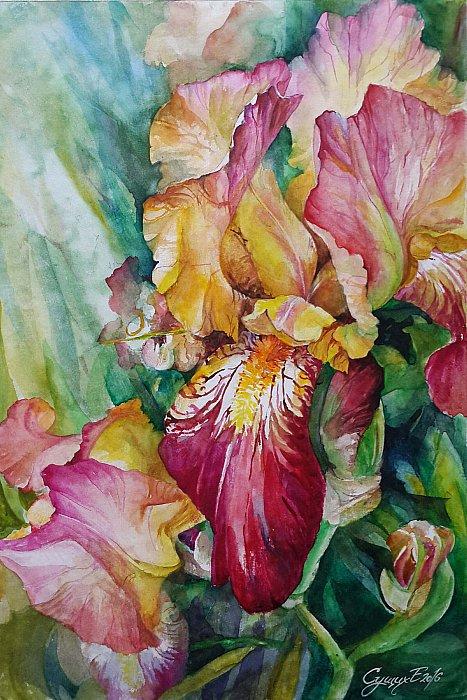 Сущих Елена – Цветут ирисы