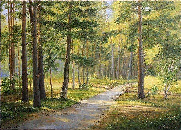 Дорога в сосновый лес