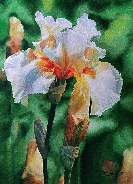 акварель Цветок ириса