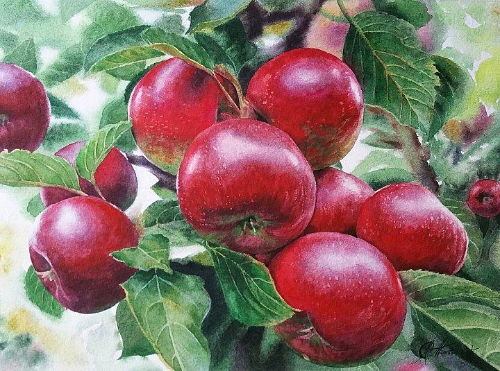 Любовь Титова – акварель Спелые яблоки