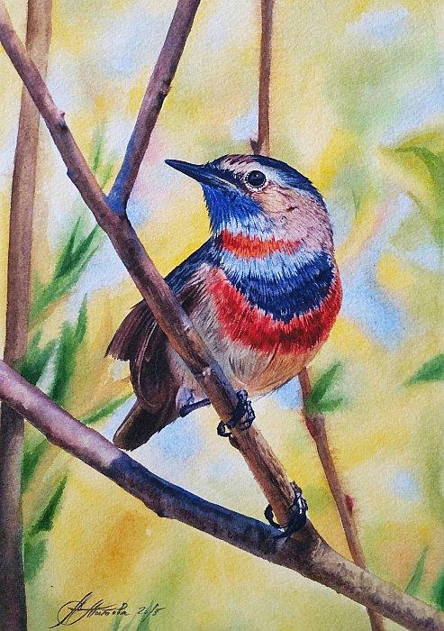 Таинственная и прекрасная варакушка – птица из семейства дроздовых, близкая родственница соловья