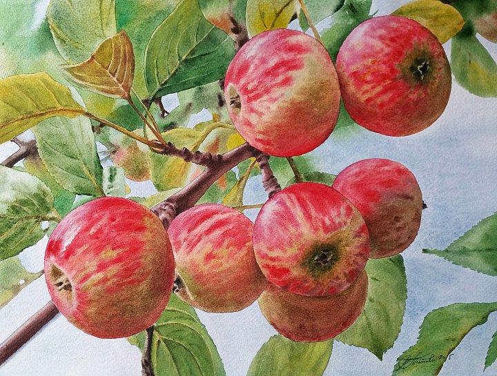 Любовь Титова – Осенние яблочки