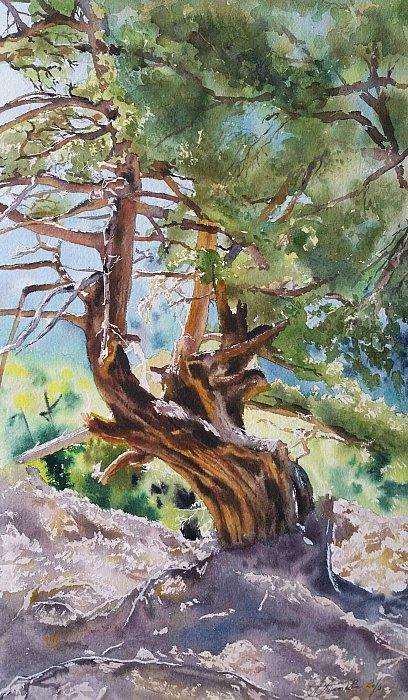 Пейзаж в ущелье Самарья